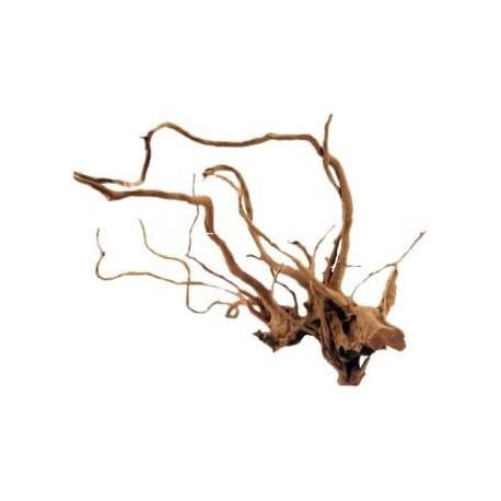 Racine rouge des marais ca. 20 - 60 cm