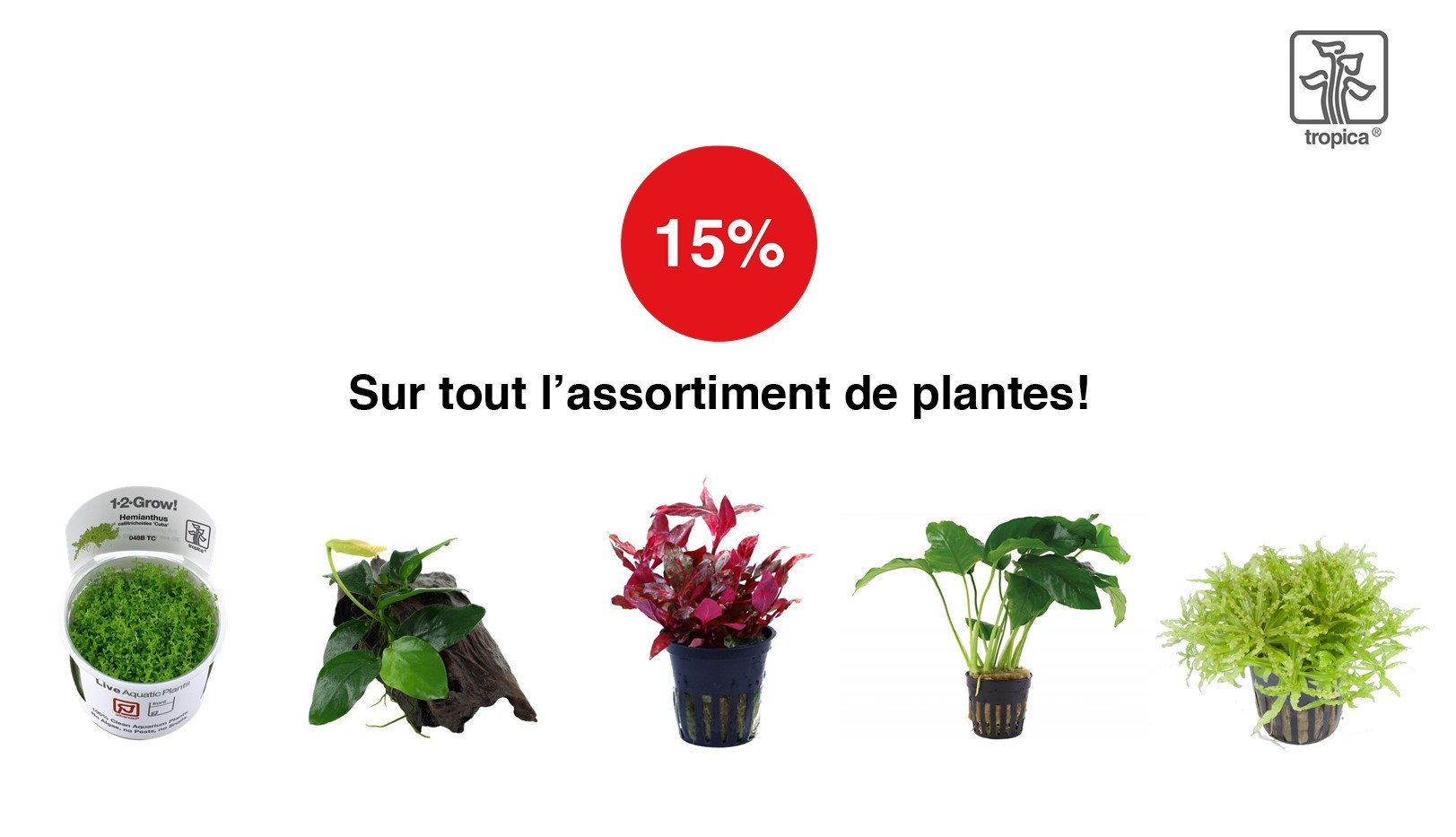 Action Plantes